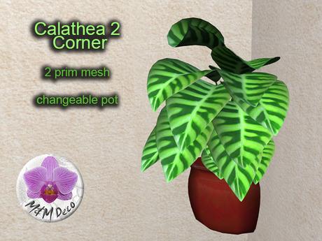 Mesh Plant Calathea 2 Corner