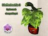 Mesh Plant Dieffenbachia 3 Corner