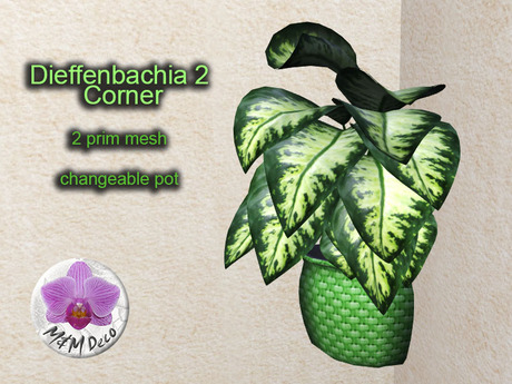 Mesh Plant Dieffenbachia 2 Corner