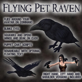 Flying Pet Raven