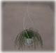 Mesh hanging plant2