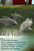 Japanese Koi Fish (White)