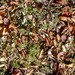 Texture: Autumn leaves on ground *SEAMLESS* *FULL PERM*