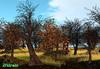 21strom Autumn Linden Tree mesh landscapes [multipack] - 3 landscapes, copy, modify