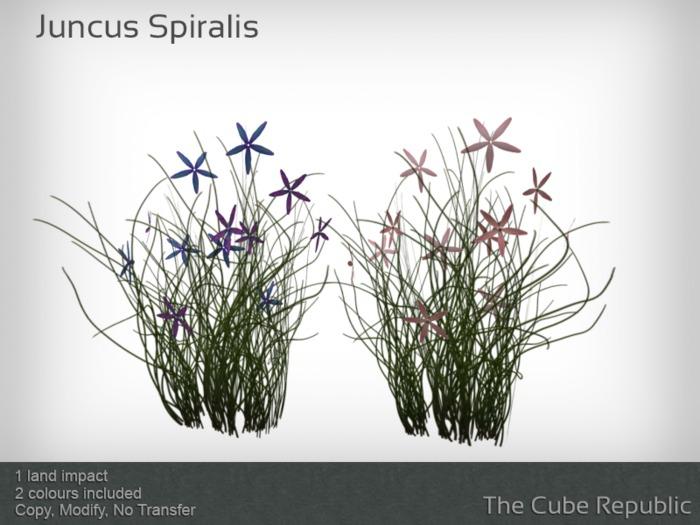 Juncus Spiralis mesh plant