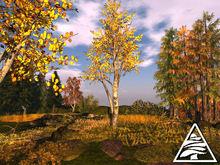 Populus tremula - poplar aspen (autumn) - 2 LI - M/T