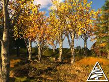 Populus tremula - poplar aspen (autumn) - 2 LI - C/M
