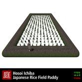 Japanese Rice Field Paddy