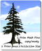 1 Prim Mesh Pine 1 Prim=max.17x12x12 M Size copy-mody