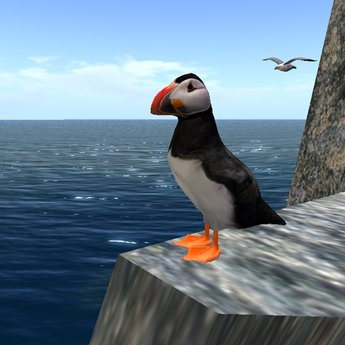 Common Puffin Standing v1.0