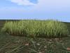 Grassgrass