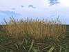 Grassprarie1