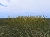 Grassprarie2