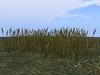 Grassswamp