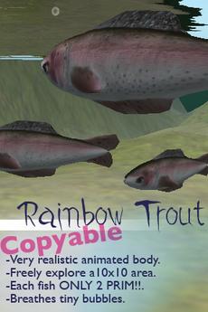 Free-Swimming Fish - Rainbow Trout