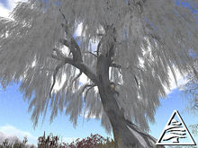 winter weeping willow 8 prims M/T