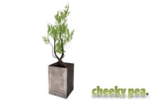 :CP: Outdoor Movies Planter
