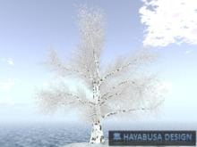 3 Trees and 2 Flowers - Low Price - Winter Discovery Box
