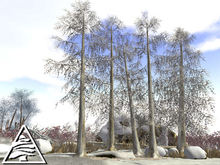 Winter larch forest  - 11 LI M/T