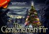 The Centenarian Fir