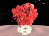 Poinsettia 4, red white