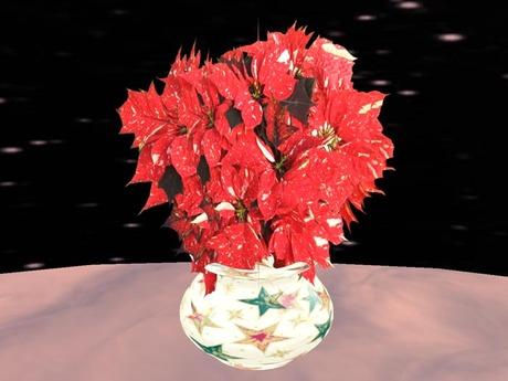 Poinsettia 4, red white