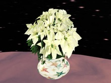Poinsettia 2, white