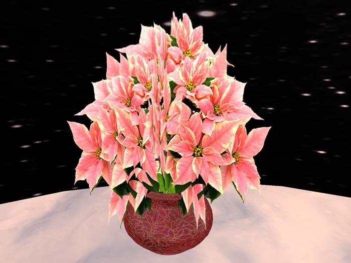 Poinsettia 5, pink