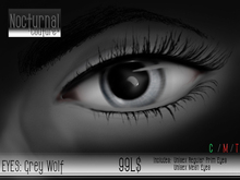 Nocturnal : Eyes_Grey Wolf