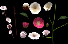 Assorted Flowers Builders Kit - Full Perm