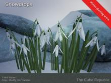 Snowdrops Winter Planting