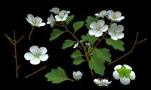 White Flowers Builders Kit