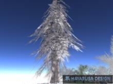 Winter Pine Conifer Tree , True 3D Botanic Tree, transfer&modify