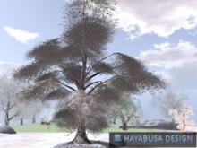 Winter Pendula Tree, True 3D Botanic Tree, transfer&modify