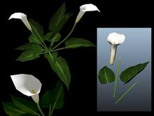 White Lilies Builders Kit - Mesh - Full Perm