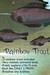 3 Free-swimming Fish - Rainbow Trout