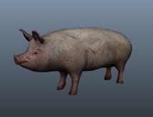 Pig - Mesh - Full Perm