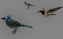 Small Birds Pack - Mesh - Full Perm