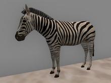 Zebra - Mesh - Full Perm
