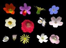 Flowers Only Builders Kit - Full Perm
