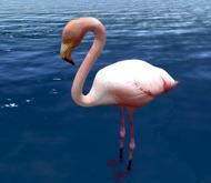 Flamingo - Mesh - Full Perm