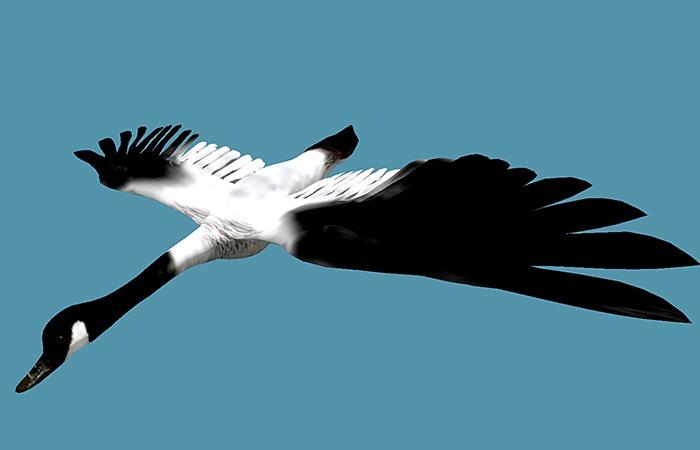 Flying Goose - Mesh - Full Perm