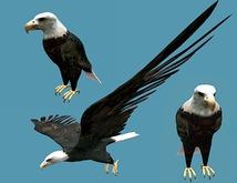 Bald Eagle Pack - Mesh - Full Perm