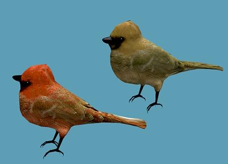 Cardinal Pack - Mesh - Full Perm