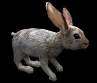 Hare - Mesh - Full Perm