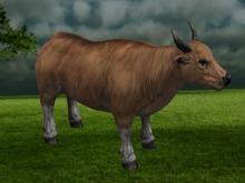 Cow - Mesh - Full Perm