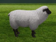 Sheep - Mesh - Full Perm
