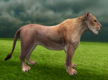 Lioness - Mesh - Full Perm