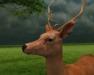 Deer 3 pic