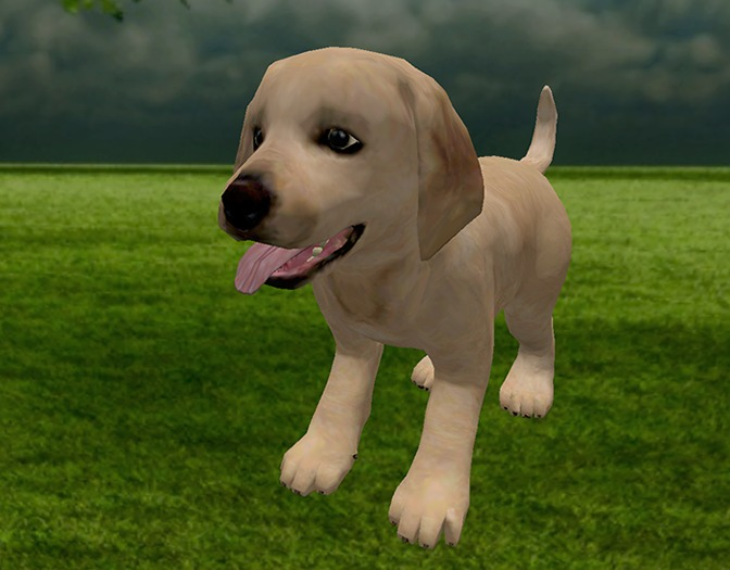 Labrador Puppy - Mesh - Full Perm